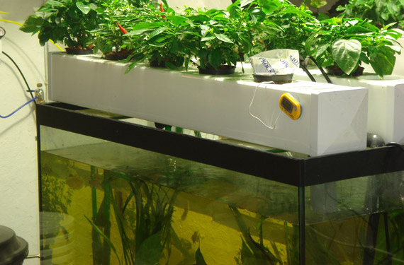 articles-aquaponics_text_1