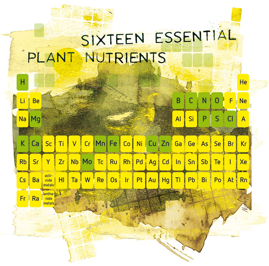 Plant nutrition and nutrient deficiency