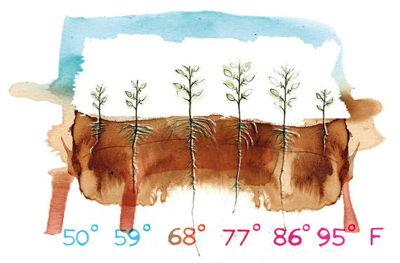 Root zone temperature and plant health