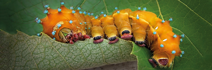 How to control pests and diseases