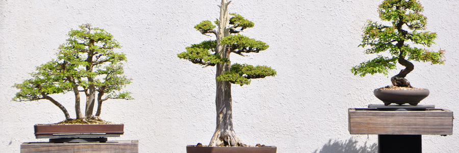 Grow it yourself: Bonsai