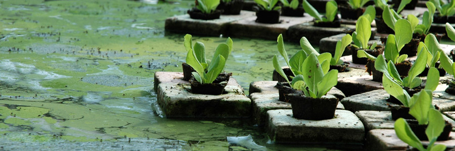 Rockwool As A Substrate For Plants Canna Gardening Usa