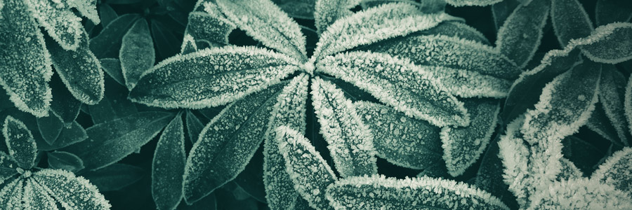 The most occurring forms of plant stress - part 2