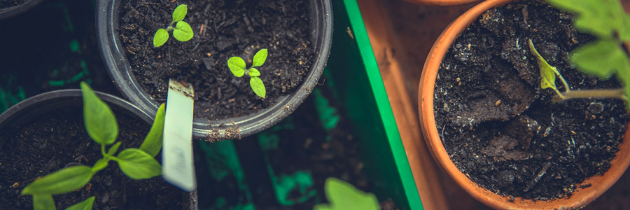 Plant growth regulators - Part 2