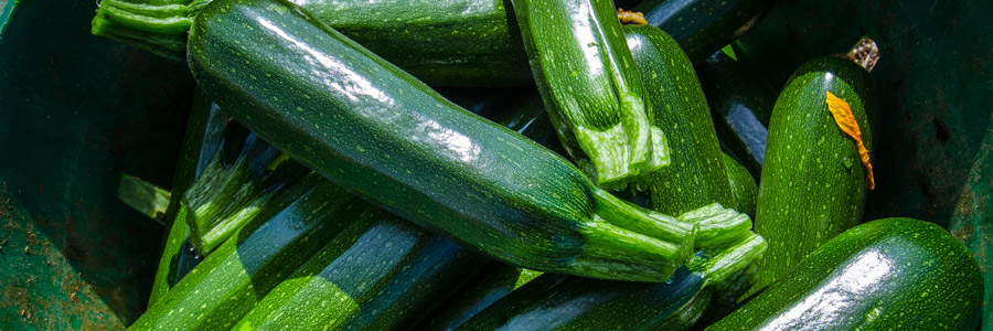 Grow it yourself: Zucchini