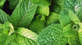 Grow it yourself: Mint
