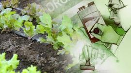 Ecologically Friendly or Organic