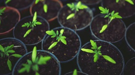 Plant nutrition and nutrient deficiency - Part 2