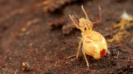 Springtails - Pests & Diseases