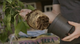 Repotting Your Plants
