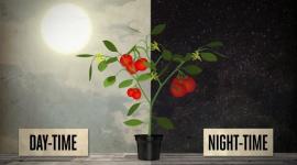 Optimum day and night temperatures